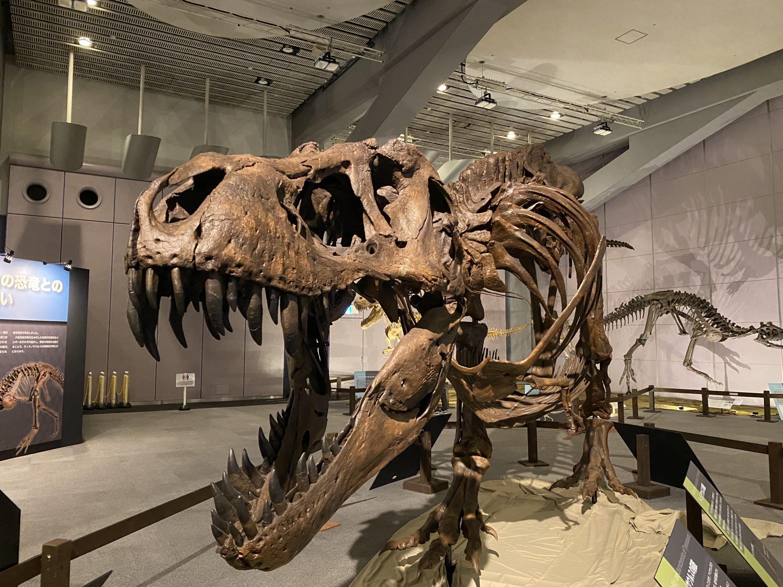 ティラノサウルス展に行ってみた【写真いっぱい】